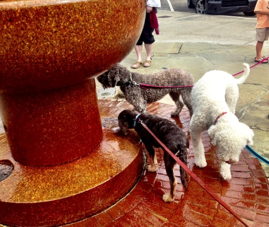 3 Dogs in a Fountain
