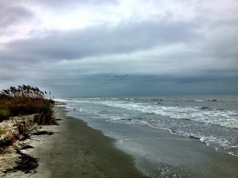 Birds over a stormy beach
